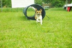 Agility Spaß für Hund und Besitzer.